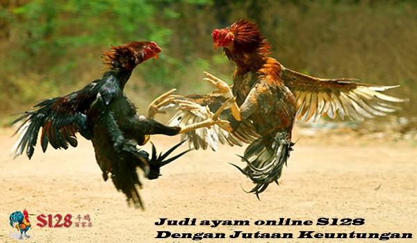 Judi ayam online S128 Dengan Jutaan Keuntungan